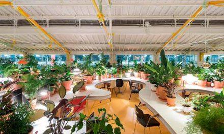 Inspiração e natureza no escritório