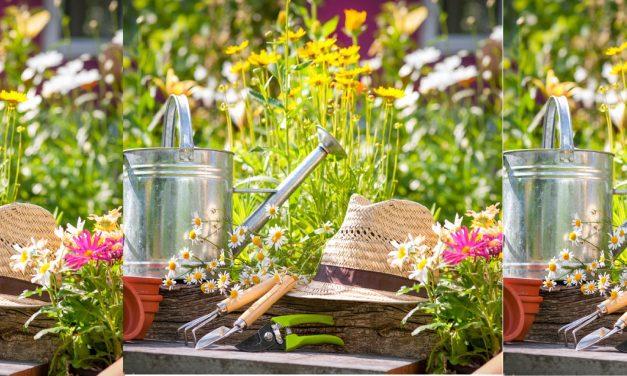 Últimos dias para aproveitar o Festival da Jardinagem