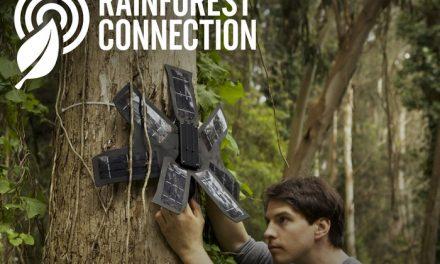 APP está salvando árvores na Amazônia
