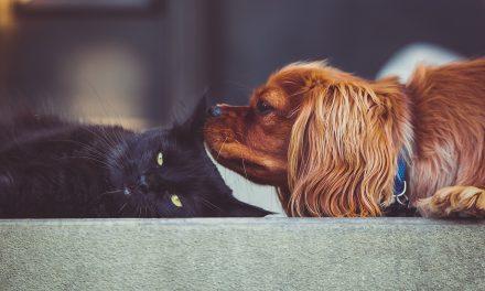 Coleira inteligente monitora atividades de cães e gatos