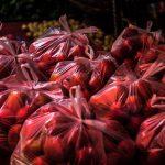 Sacos plásticos que não poluem são desenvolvidos no Chile
