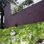 Startup desenvolve telha hidropônica para cultivo de plantas