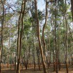 GreenPlac traz novos cenários para o setor florestal