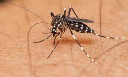 Brasileiros desenvolvem biossensor para diagnosticar Zika