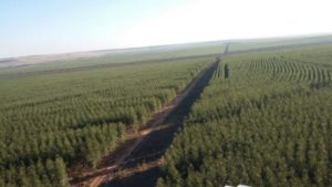 Greenplac traz novos horizontes para o setor ambiental